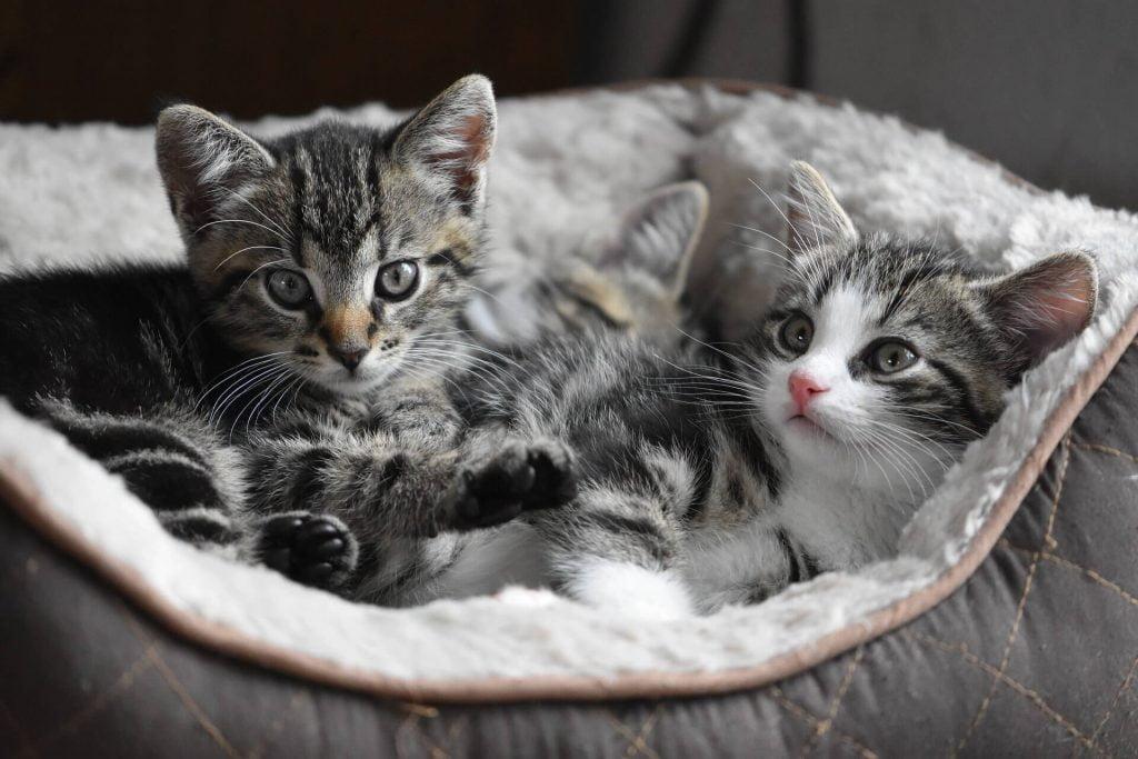 Choosing a new healthy happy kitten