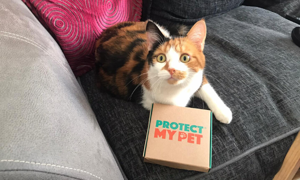 Protect My Pet Flea Worm Subscription Box