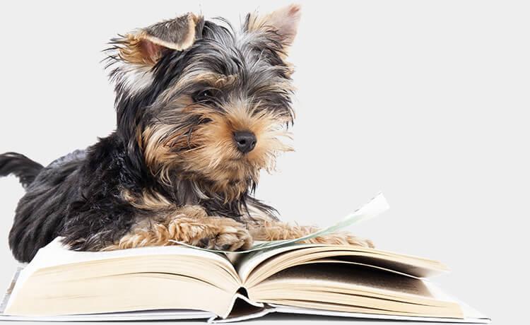 Ticks on dogs FAQs