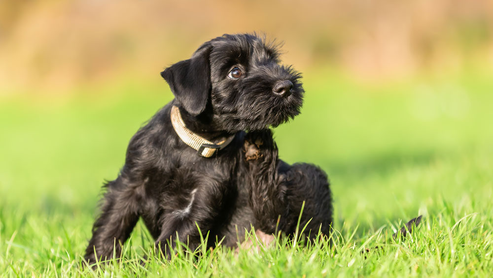 flea and worm treatment for puppies