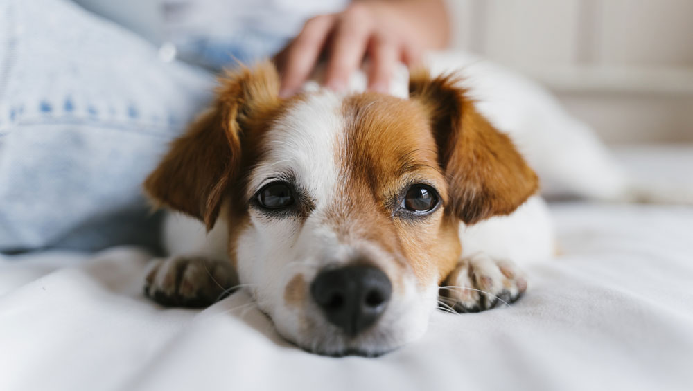 monthly flea treatment for dogs